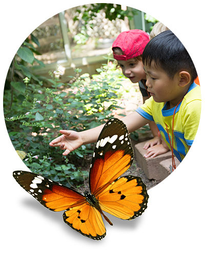 Charlotte Nature Museum Summer Camps