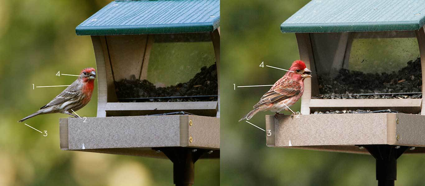 finch-comparison.jpg?mtime=2017122817574
