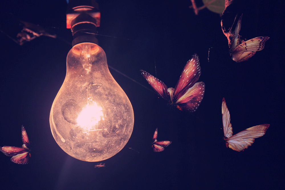insects-lightbulb.jpg#asset:6521