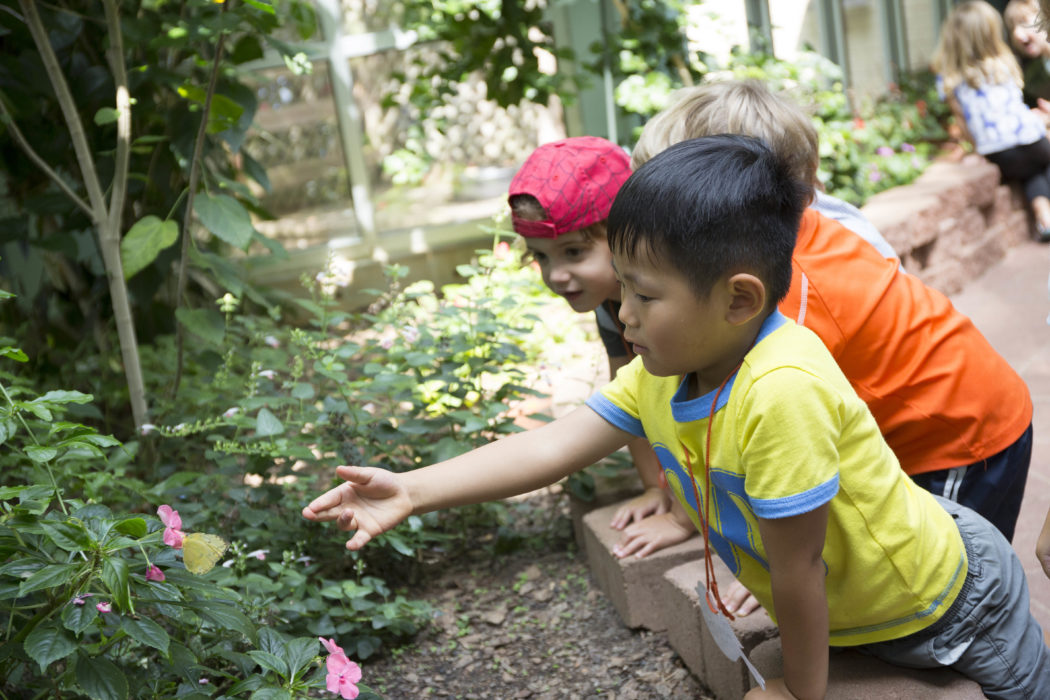 Butterfly Pavilion Exhibition At Discovery Place Nature