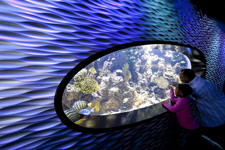 World-Alive-aquarium