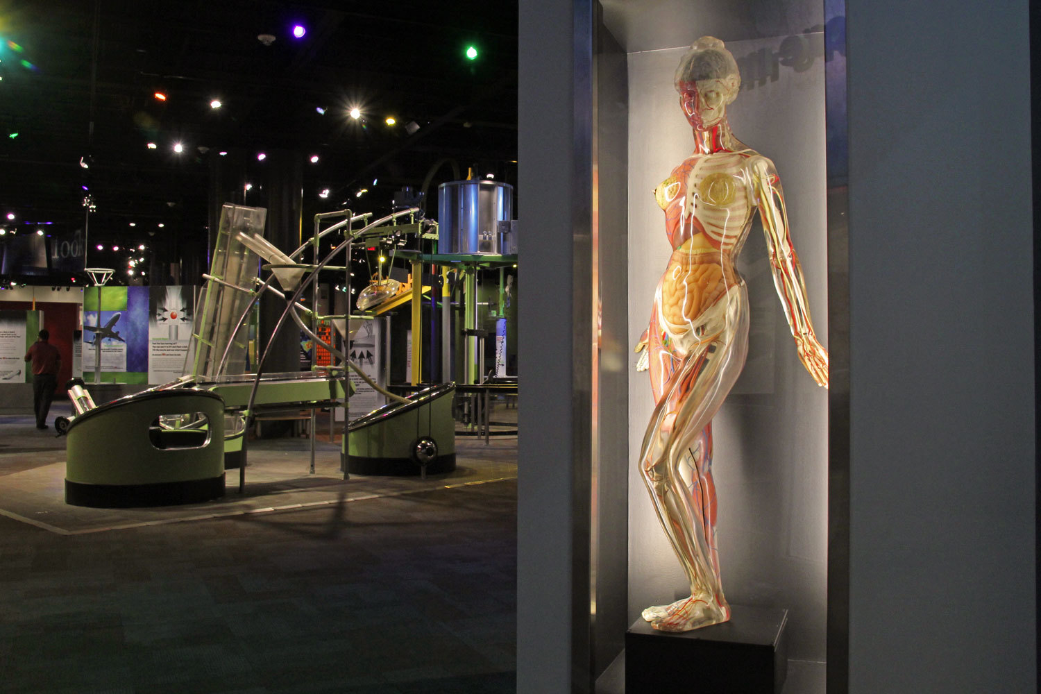 Transparent Anatomical Mannikin or TAM returns for the new Explore More Me lab